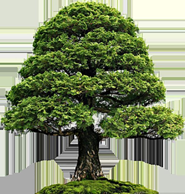 tree@2x