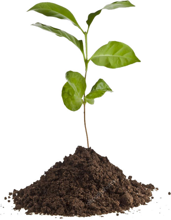 plant@2x