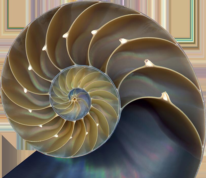 shell@2x